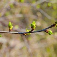 Весна пришла кричат деревья :: Света Кондрашова