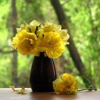 Тюльпаны махровые :: super-krokus.tur ( Наталья )