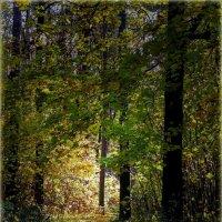 Осенний туннель :: Laborant Григоров