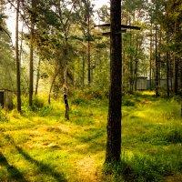 Сказочные лесные толчки :: Сергей Алексеев
