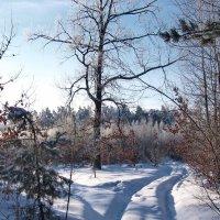 В лесу :: Николай Котко