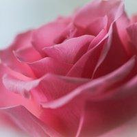 роза :: Lana Kasiková