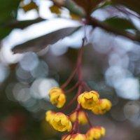 Жёлтые цветочки :: Андрей Майоров