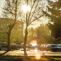 В белом золоте заката... :: Дмитрий Костоусов
