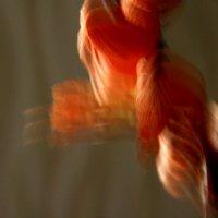 От ветра закачались  лепестки..... :: Валерия  Полещикова