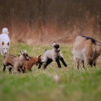 Семья и пастушка :: Валентина Ломакина