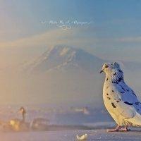 Голубь с горы Арарат :: Армен Абгарян
