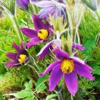 Райские цветы :: Маргарита Батырева