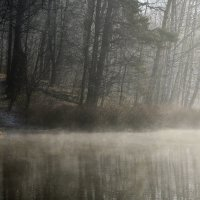 Утром туманным.... :: Юрий Цыплятников