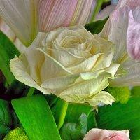 Белая роза :: Наталия Лыкова