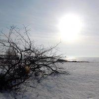 Мартовское солнце :: Ольга Алеева