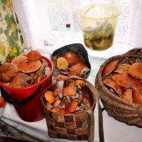 Кстати, о грибах.... :: Vladimir Semenchukov