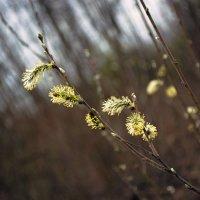 Весною... :: Юрий