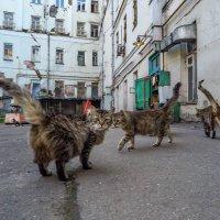 Хвосты у нас опять трубой! :: Ирина Данилова