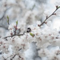 Flower_86 :: Trage