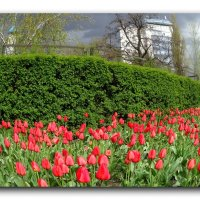 Весенние краски. :: Чария Зоя