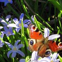 Апрельские краски :: irina