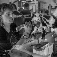 3D-рисование кота :: Алексей Окунеев