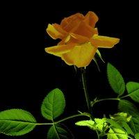 Что значат листья у цветка?... :: Александр Попов