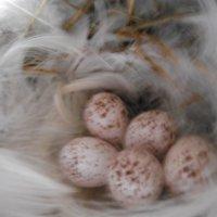 ласточкино гнездо :: игорь