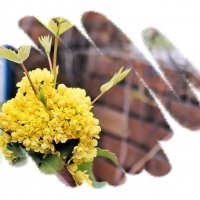 Аромат цветов льётся в небеса! :: Валентина ツ ღ✿ღ