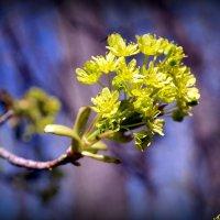 Цветут дерева в лесу :: Андрей Заломленков