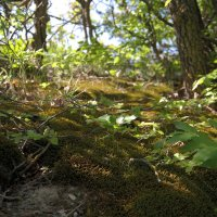 лес :: ALEX MAK