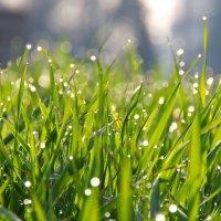 утро после дождя :: Евгений Лобойко