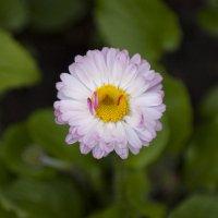 Flower_84 :: Trage