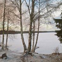у зимнего озера :: Елена