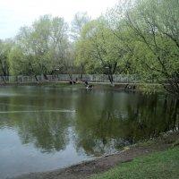 Рыбку ловят рыбаки. :: Ольга Кривых