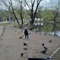 Малыш. Самокат и голуби. :: Ольга Кривых