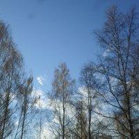 Апрельское небо. :: BoxerMak Mak