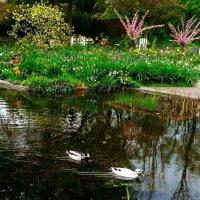 Весна дарит красоту :: Nina Yudicheva