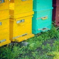 пчелки :: Katya Briz