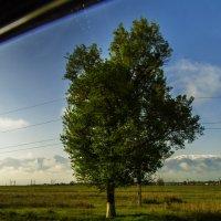 Из окна Авто :: Дмитрий Потапкин