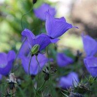 Цветы :: Ivan Dem