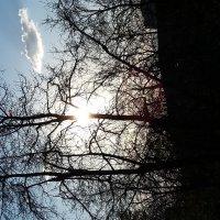 Сила Солнца :: Виктория Нефедова