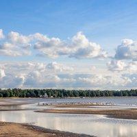 Вид на парк Дубки :: Виталий