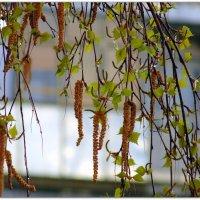 За окном весна !!! :: Мила Бовкун