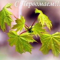 С Праздником весны и труда! :: Вячеслав Минаев