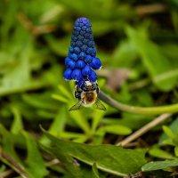 пчелка :: Игорь Щеулов