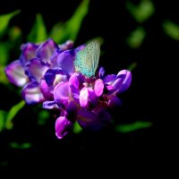 Бабочка :: Николай П
