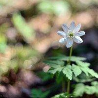 весна :: Анастасия Иноземцева