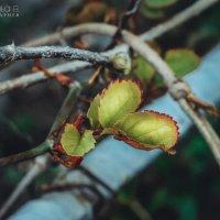 Краски весны :: Маргарита Б.