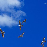 11 крыльев. Чайки в небе :: Nina Yudicheva