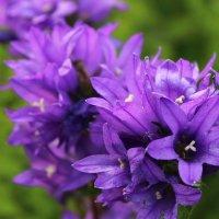 Цветы :: Влад В.
