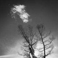Вслед за облаком :: Алексей (АСкет) Степанов