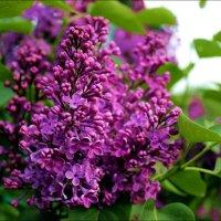 Буйство цветения :: Татьяна Пальчикова