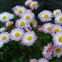Весенние цветы :: Владимир Бровко